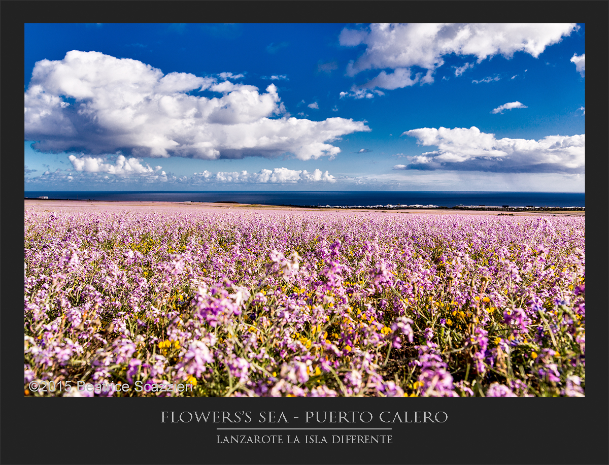 Flowers's sea - Puerto Calero