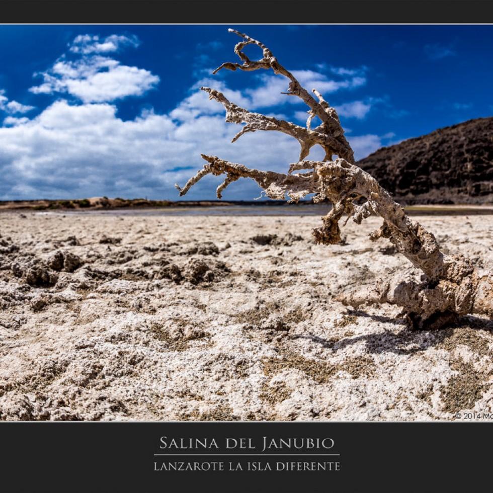 Salina del Janubio, Lanzarote